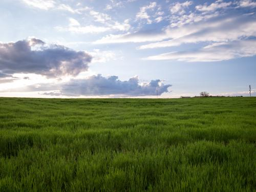 A field full of green grass with a bright, slightly cloudy sky above.